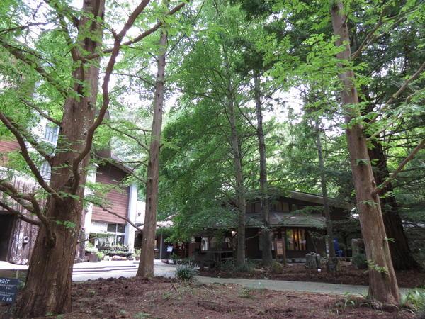 森林植物園.JPG